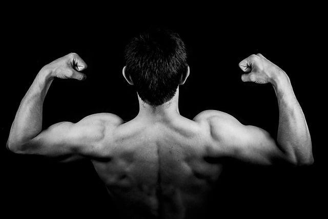 des biceps musclés